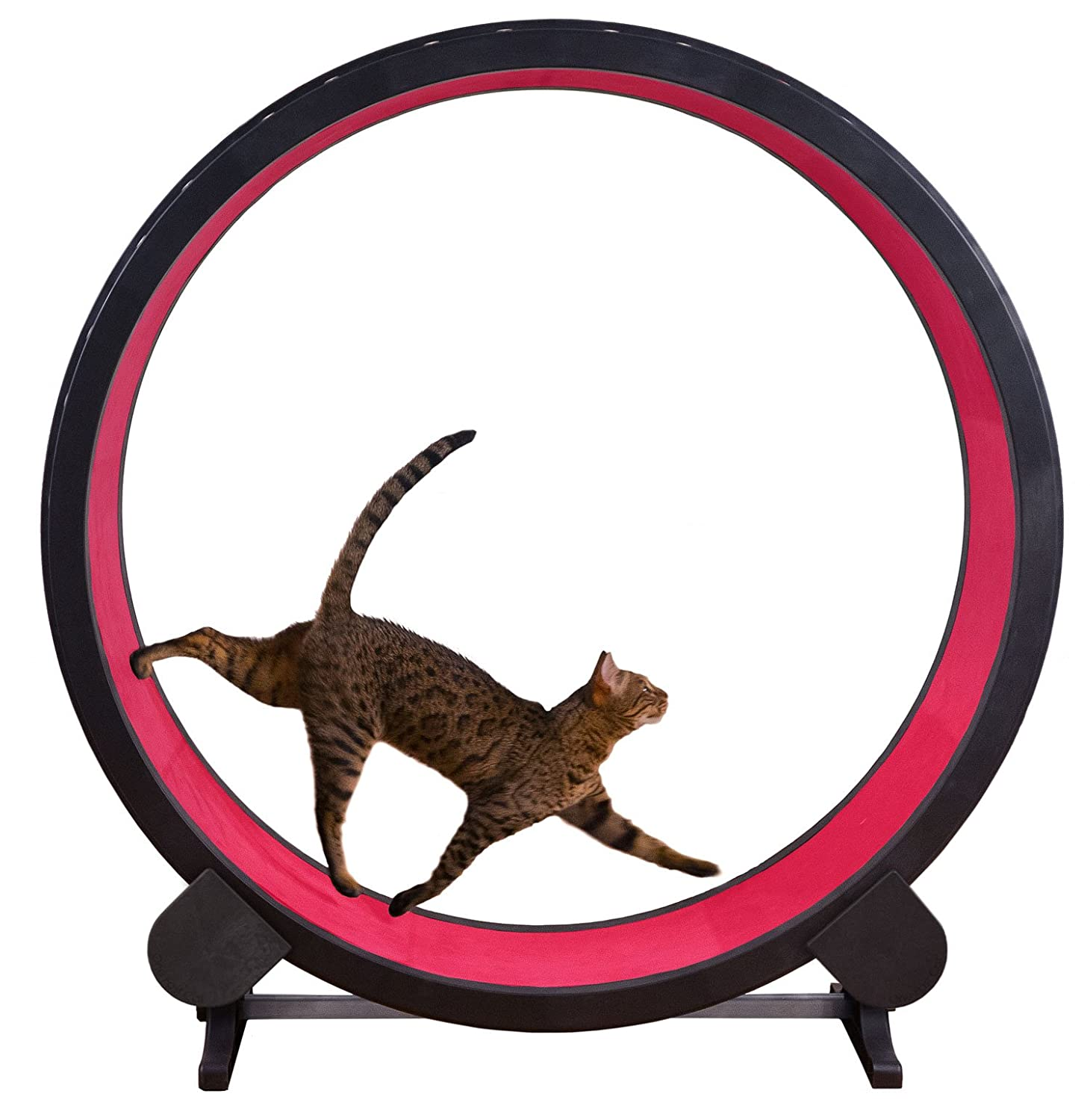 One Fast Cat Exercise Wheel - Red