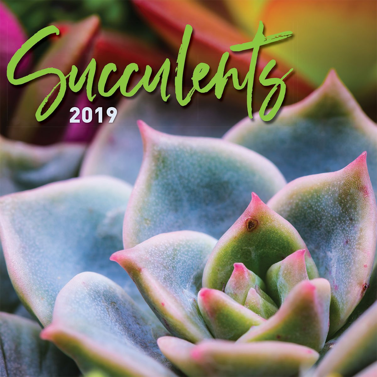 Turner Photo Succulents 2019 Wall Calendar (199989400840 Office Wall Calendar (19998940084) by Turner