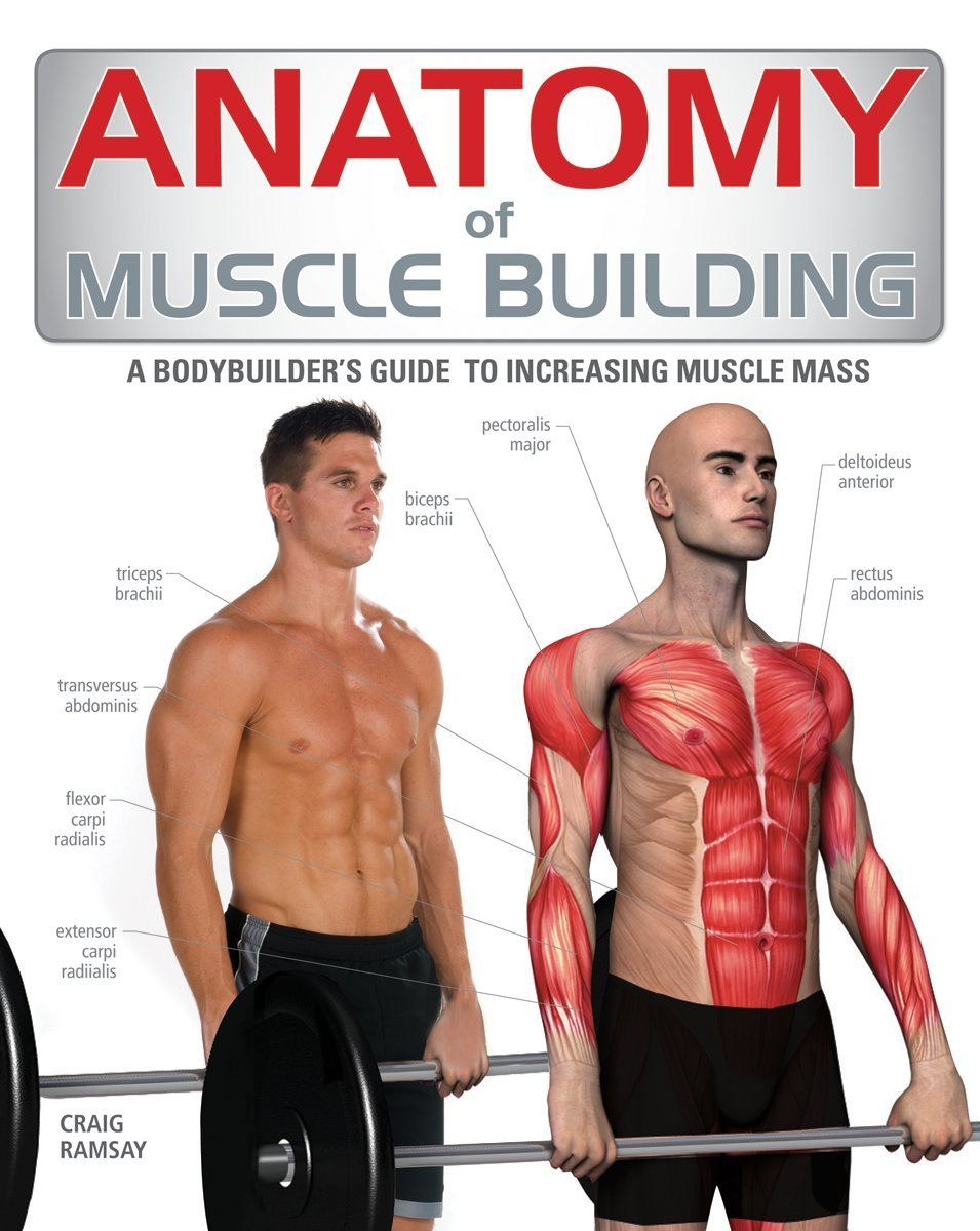 Buy Anatomy of Muscle Building: A Trainer\'s Guide to Increasing ...
