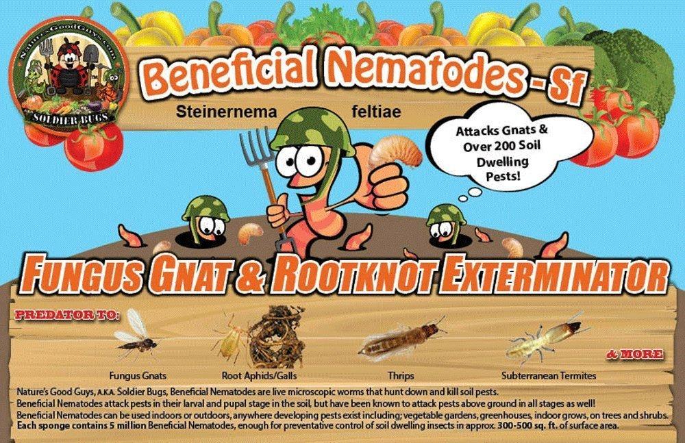 Nature's Good Guys 50 Million Live Beneficial Nematodes SF-Steinernema feltiae