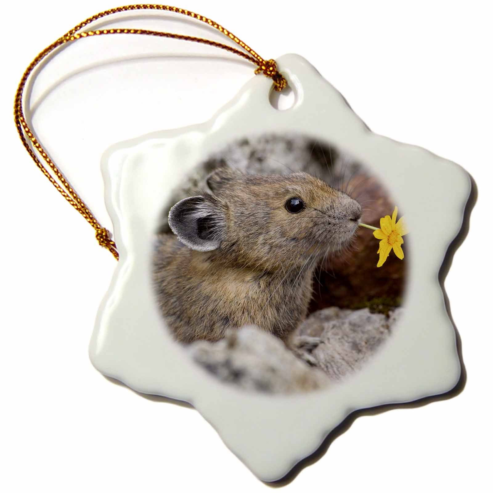 3dRose orn_95158_1 Washington, North Cascades NP, Pika Wildlife-US48 BJA0235-Jaynes Gallery-Snowflake Ornament, Porcelain, 3-Inch