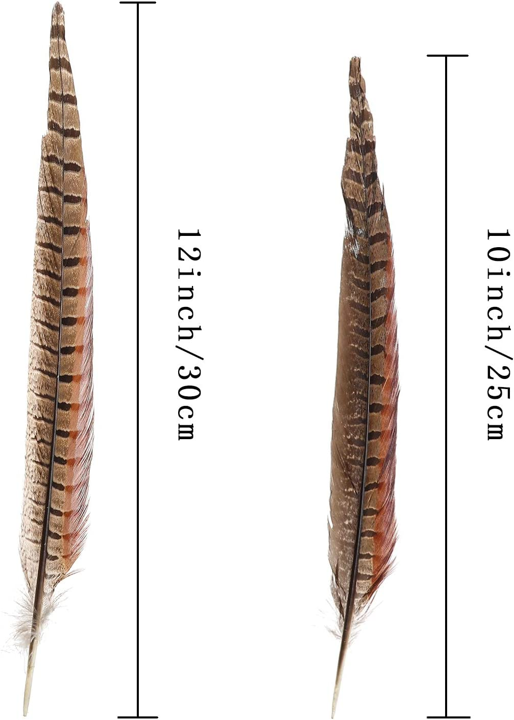 Group of twenty 7 to 10 inch pheasant feathers
