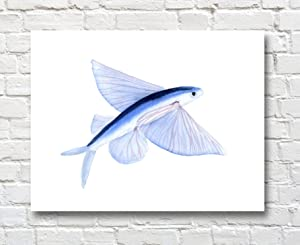 Flying Fish Watercolor Painting 11 X 14 Flying Fish Art Print Animal Wall Decor