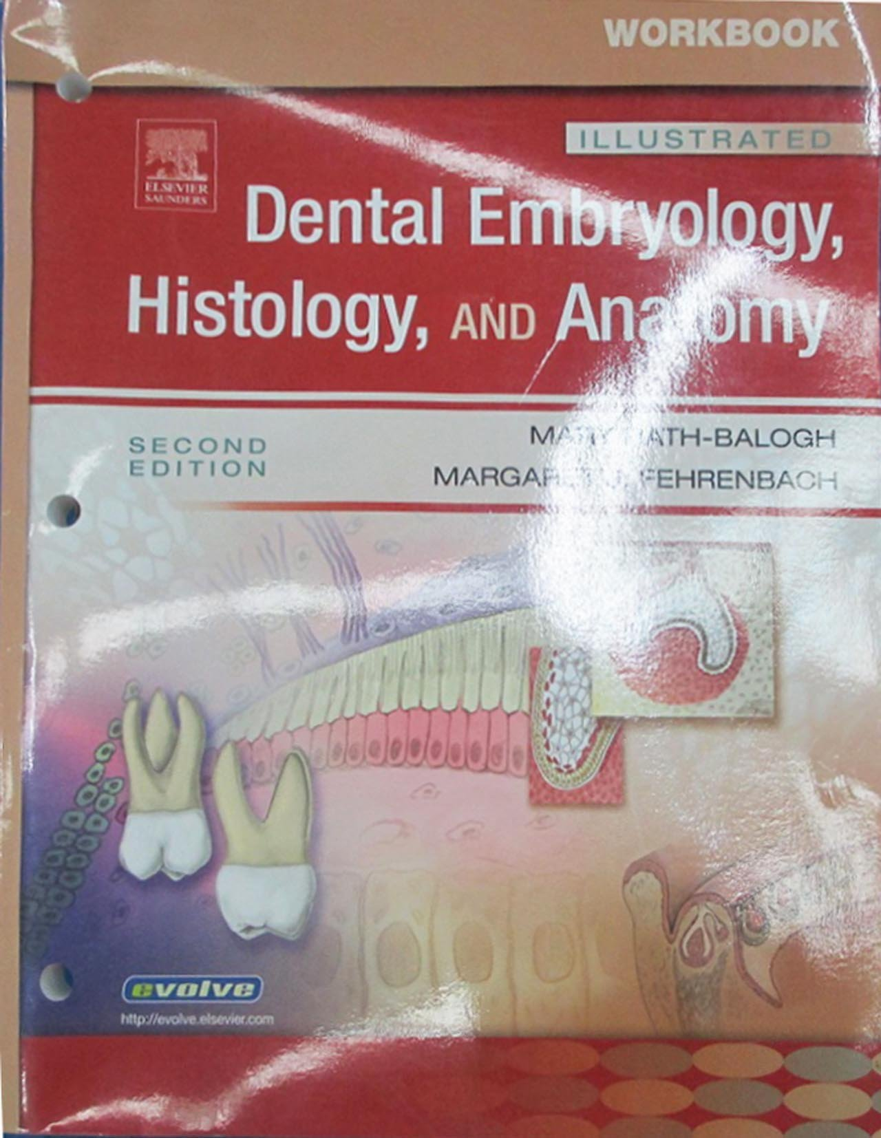 Workbook for Illustrated Dental Embryology, Histology, and Anatomy ...