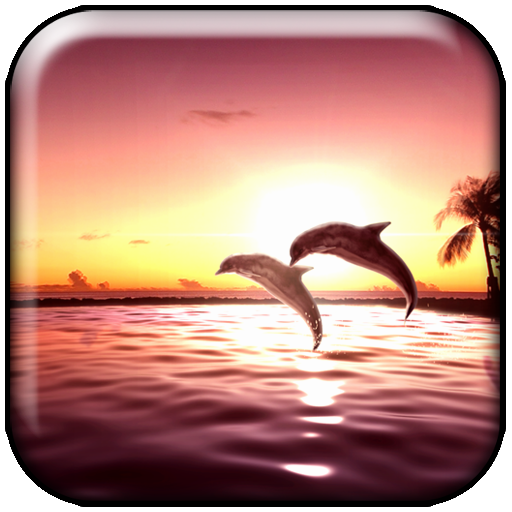 sunset dolphin interactive live wallpaper