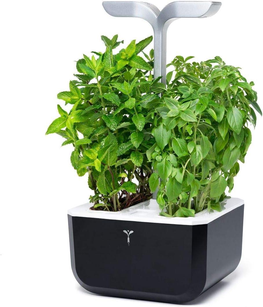 Véritable® EXKY® - Huerto de Interior Made in Francia - Jardín Interno autónomo y Inteligente - 2 Lingots® incluidos (Smart Soft Black)