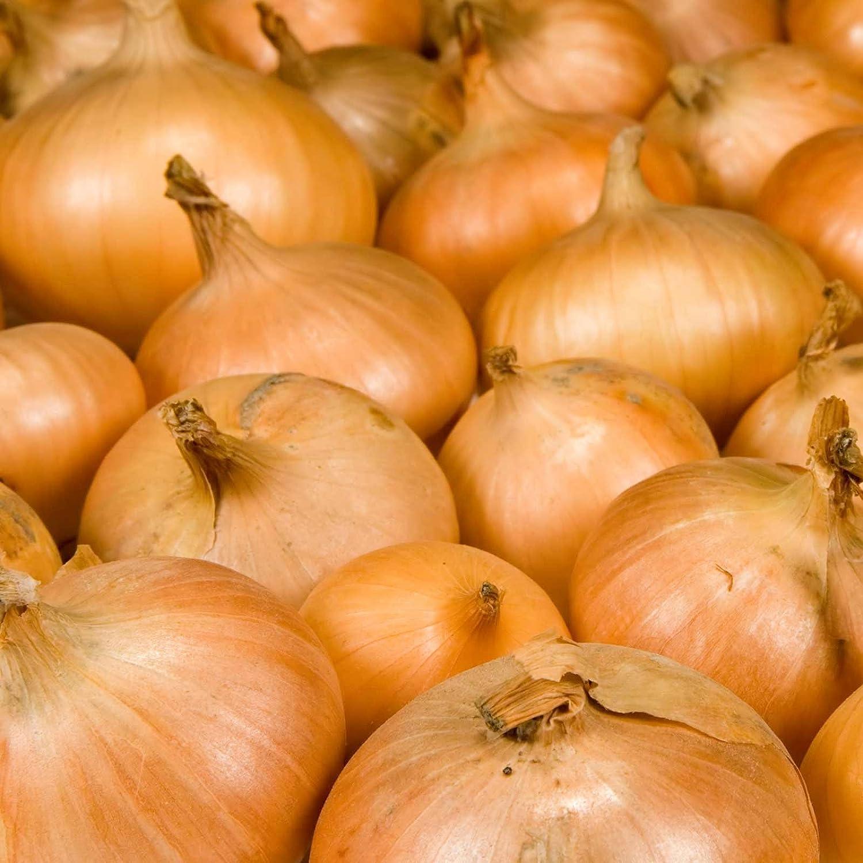 Walla Walla Onion Garden Seeds - 25,000 Seeds - Non-GMO, Heirloom Vegetable Gardening Seed
