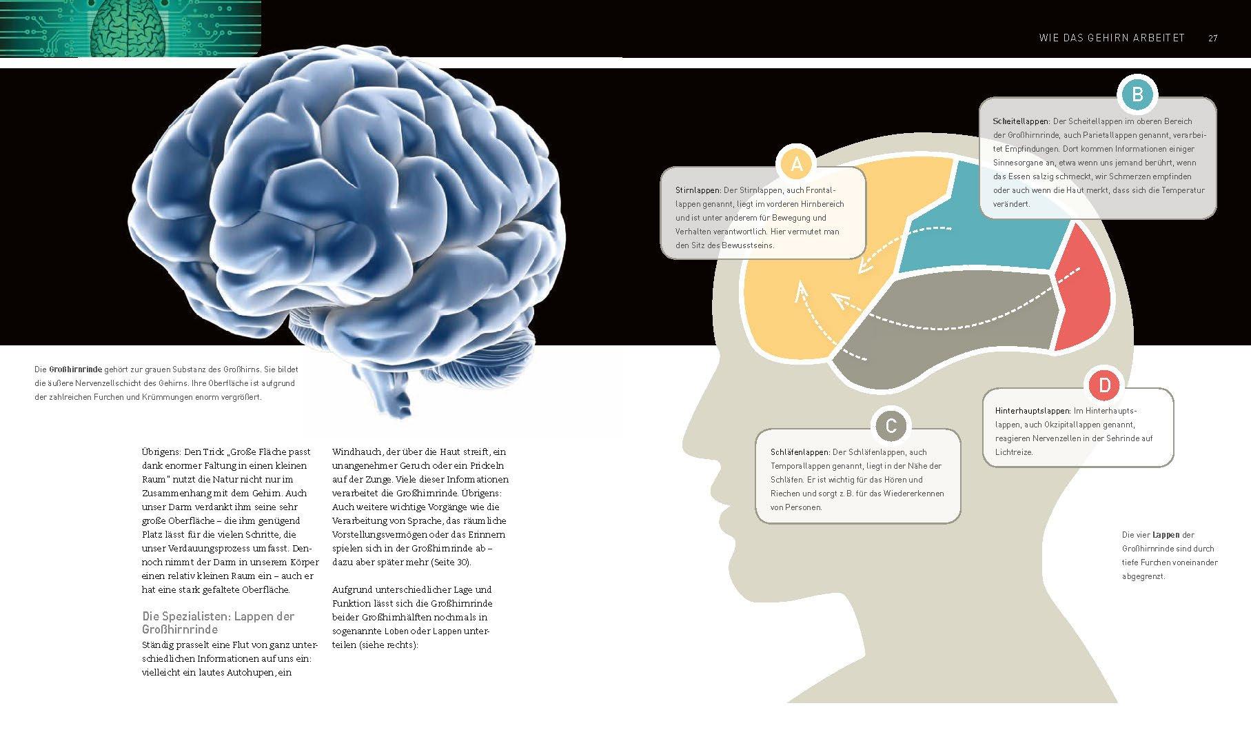 Das Gehirn - Wie wir denken, fühlen, handeln: Amazon.de: Christine ...