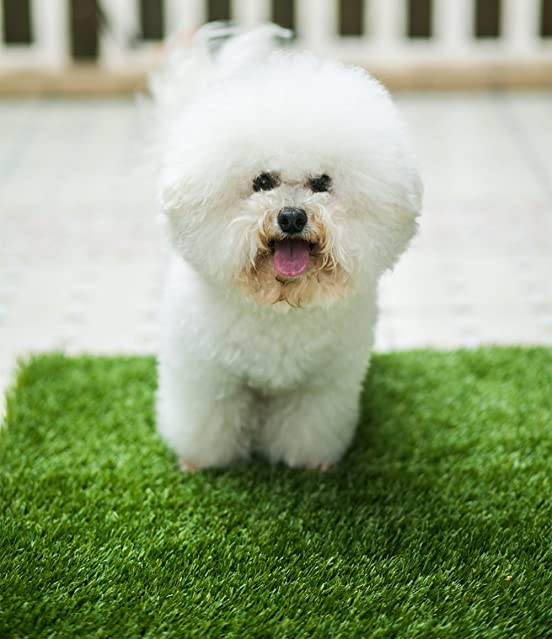 MTBRO Puppy