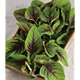 David's Garden Seeds Greens Leafy Red Leaf Vegetable Amaranth 5166 (Green) 500 Non-GMO, Open Pollinated Seeds