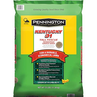 Pennington Kentucky 31 Tall Fescue Grass Seed, 25 LB : Garden & Outdoor