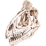 Resin Dinosaur Cryolophosaurus Skull Fossil Teaching Bone Model Collectibles Home Decoration 3 Color Pick - White , /