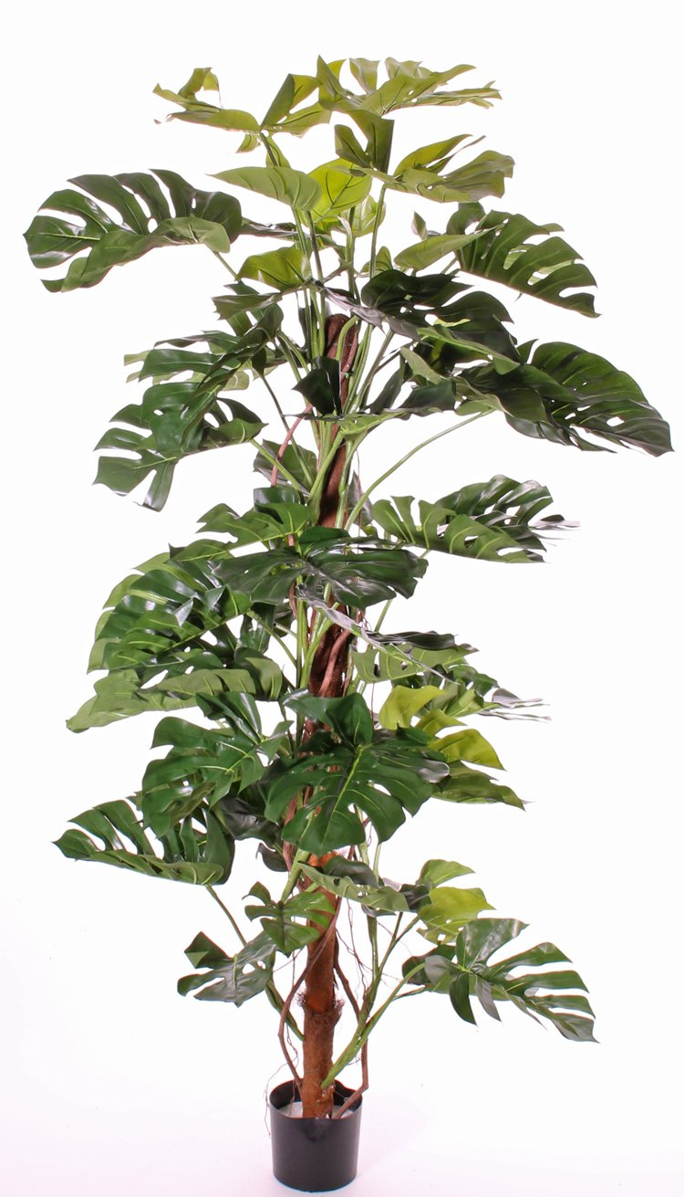 Artificial Cheese Plant - Premium Quality - Fake Split-Philo Houseplant. Red Hot Plants