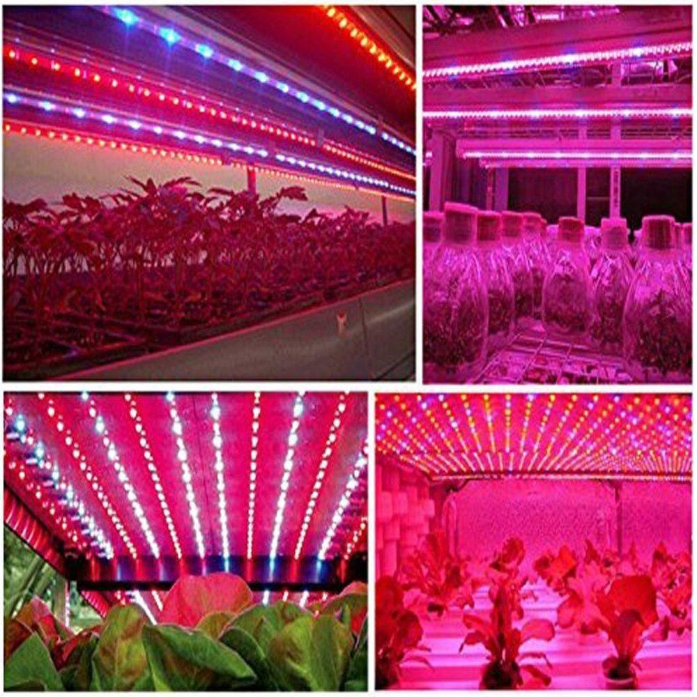 1 Seil Licht f/ür Aquarium Gew/ächsh/äuser Pflanze Tesfish LED Pflanzen wachsen Streifen Licht DC 12V IP20 Vollspektrum SMD 5050 rot blau 4
