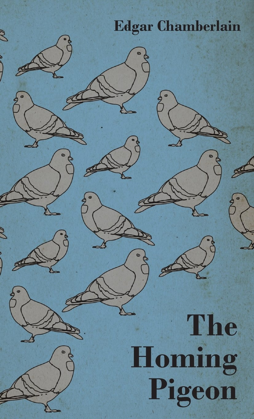 The Homing Pigeon