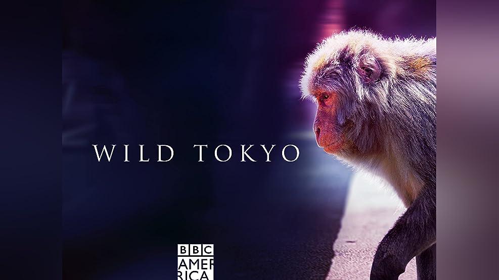 Wild Tokyo, Season 1