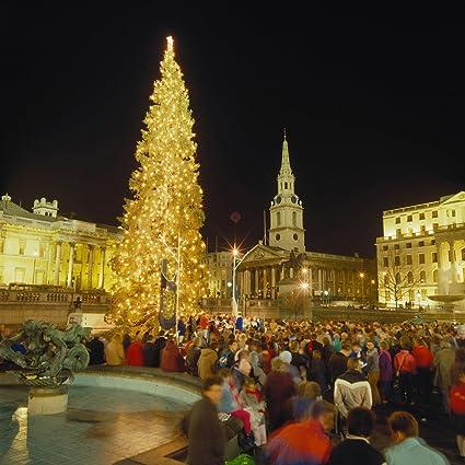 England Christmas Tree.Amazon Com Christmas Tree At Trafalgar Square London