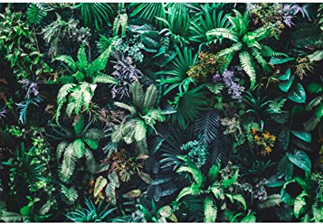 Cassisy 3x2m Vinilo Primavera Telon de Fondo Naturaleza Jardin Vertical Fondo de Pantalla de Hoja Verde Tropical Fondos para Fotografia Party Photo Studio Props Photo Booth: Amazon.es: Electrónica