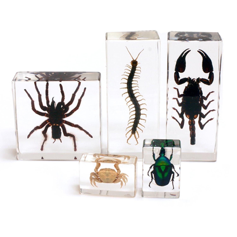 Envío y cambio gratis. Arthropod Collection 5pc 5pc 5pc Set  precio razonable