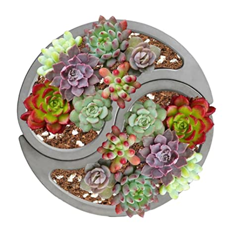Amazon.com: SHZONS Mini Succulent Pot, Succulent Plant Flower Pot,Silicone Mold Gypsum Cement Fleshy Flower Bonsai DIY Ashtray Candle Holder Mould: Kitchen ...