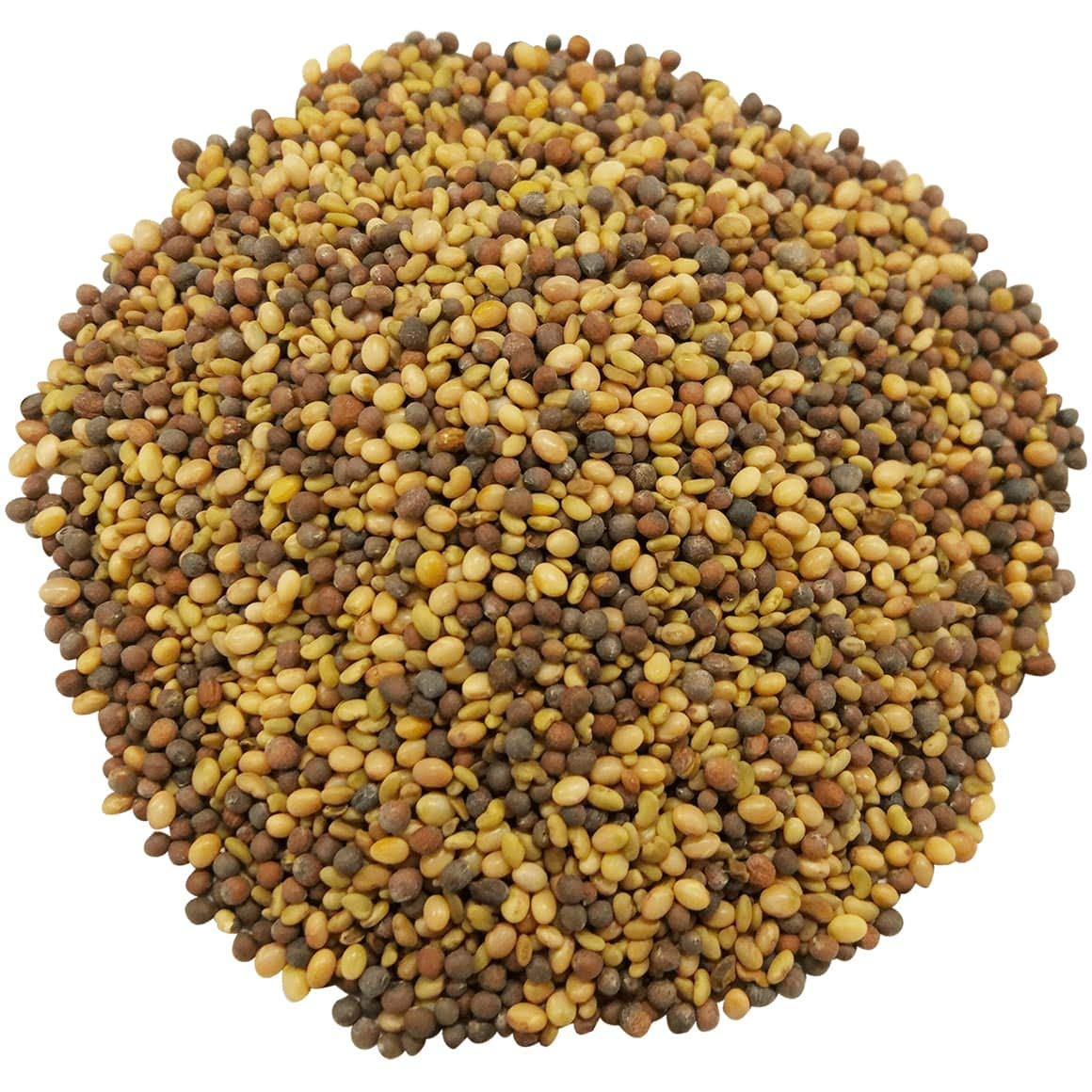 Antioxidant Mix of Sprouting Seeds, 5 Pounds - Broccoli, Clover, Alfalfa, Kosher, Raw, Vegan by Food to Live