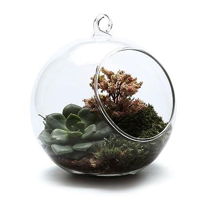 T4u 13 5cm Glass Hanging Plant Terrariums Flower Air Plant Pot