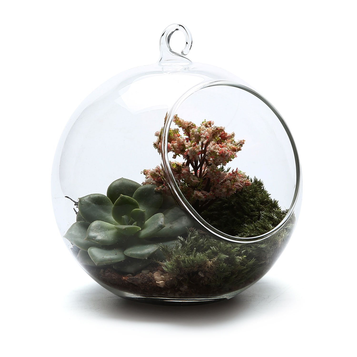 Rachel's choice 5.75''Glass Hanging Plant Terrariums Flower Air Plant Pot Container Home Office Wedding Decoration Votive Holder Sucuulent Cactus Plant Pots by T4U