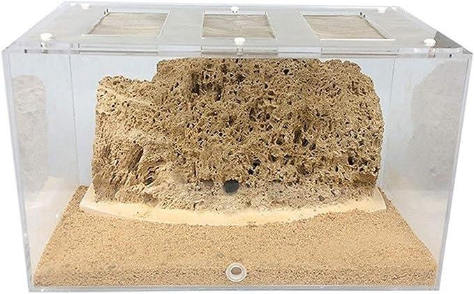 hlyp Piedra Absorbente Ecológica Hecha A Mano Natural Nido De Hormigas Acrílicas, Hábitat De Visión De Hormigas, Jaula De Cría De Villas, Hormiga De Mascotas