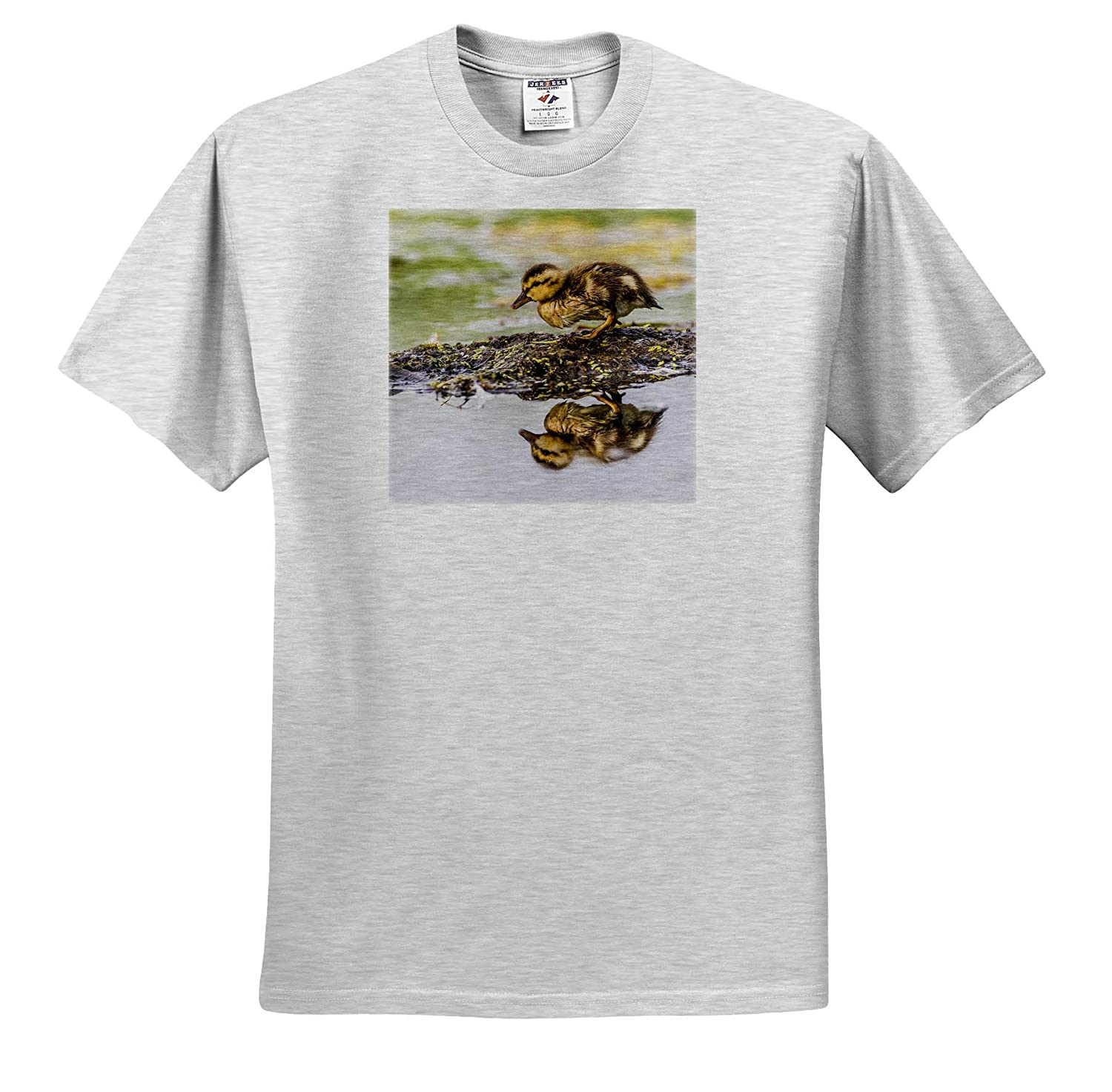 3dRose Danita Delimont Newly Hatched Cinnamon Teal Duckling - Adult T-Shirt XL ts/_315220 USA Ducks Wyoming