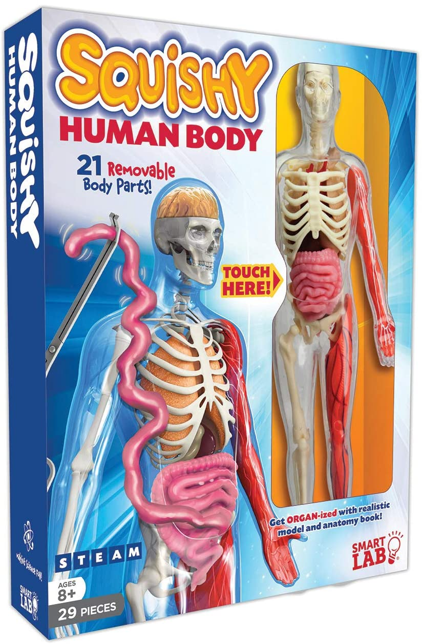 Squishy Human Body (SmartLAB)