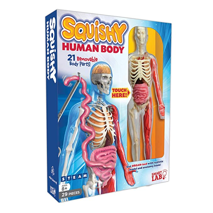 Amazon Smartlab Toys Squishy Human Body Md Lucille M Kayes