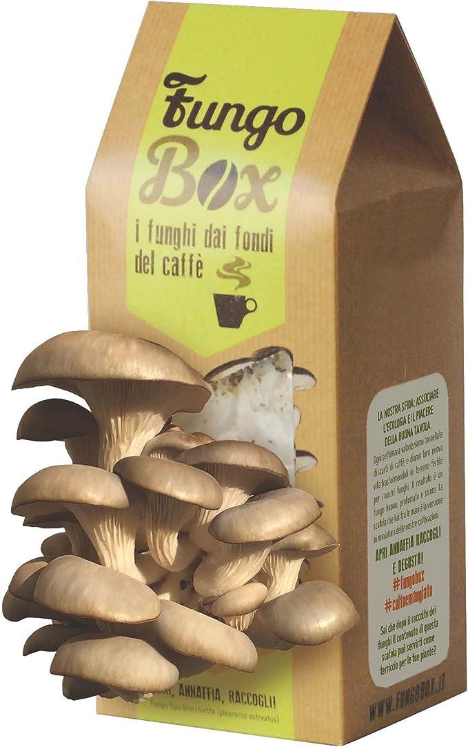Caja de cultivo casero de setas ostra (comestibles y sabrosas) a ...