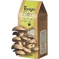 Caja de cultivo casero de setas ostra (comestibles