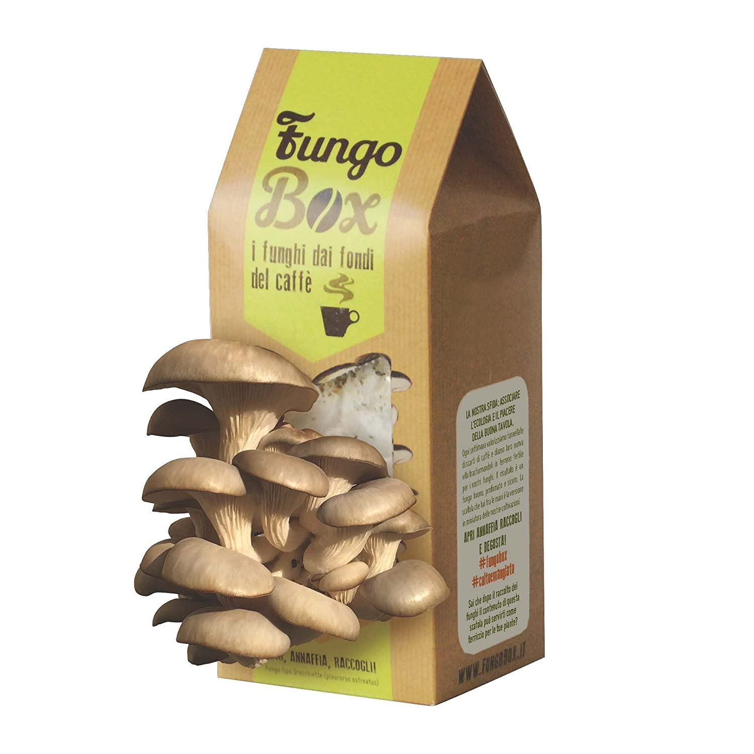 FungoBox: Home Kit with edible mushrooms (Oyster) and tokens by the funds of espresso-Ideal Gift Upcycle Italia