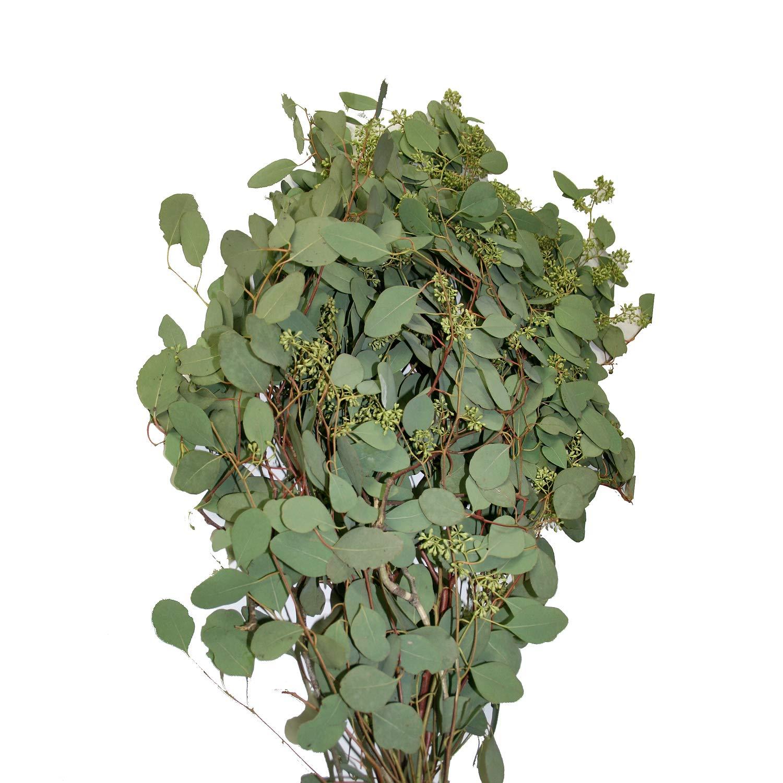 Farm Fresh Natural Seeded Eucalyptus - 40 Stems