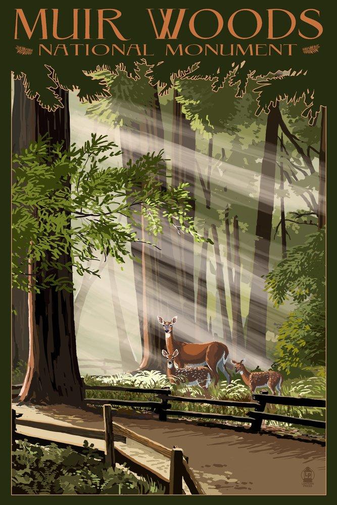 Muir Woods National Monument、カリフォルニア – 鹿とFawns 9 x 12 Art Print LANT-36760-9x12 B00N5D0MJS 9 x 12 Art Print9 x 12 Art Print