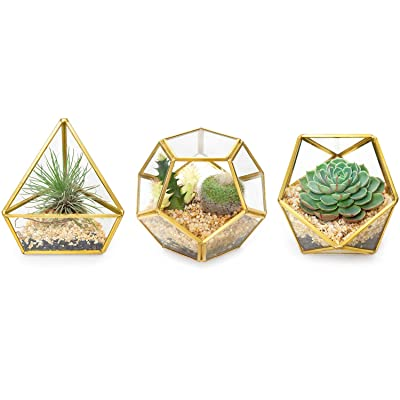 Mkono 4 Inch Mini Glass Geometric Terrarium Container Set of 3 Modern Tabletop Planter Windowsill Decor Shelves DIY Display Box Centerpiece Gift for Succulent Air Plant Miniature Fairy Garden, Gold: Garden & Outdoor