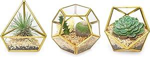 "Mkono Mini Glass Geometric Terrarium Container Set of 3 Modern Tabletop Planter Windowsill Decor Shelves DIY Display Box Centerpiece Gift for Succulent Air Plant Miniature Fairy Garden, Gold, 4"""