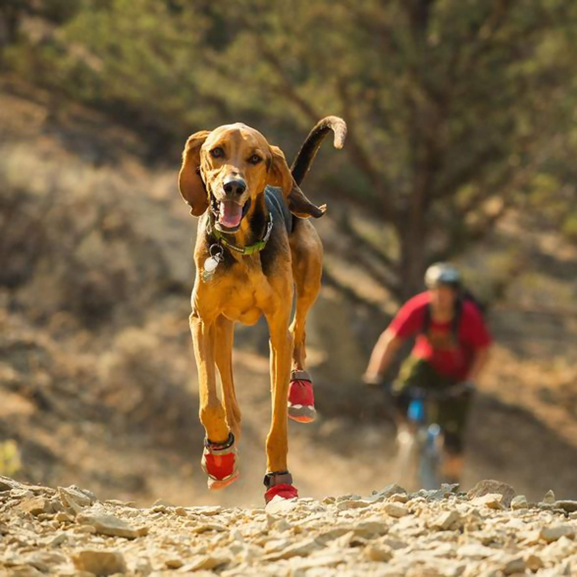 RUFFWEAR - Grip Trex, Red Currant, 2.25 in (4 Boots) by RUFFWEAR (Image #7)