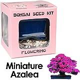 Eve's Miniature Azalea Bonsai Seed Kit, Flowering, Complete Kit to Grow Azalea Bonsai from Seed