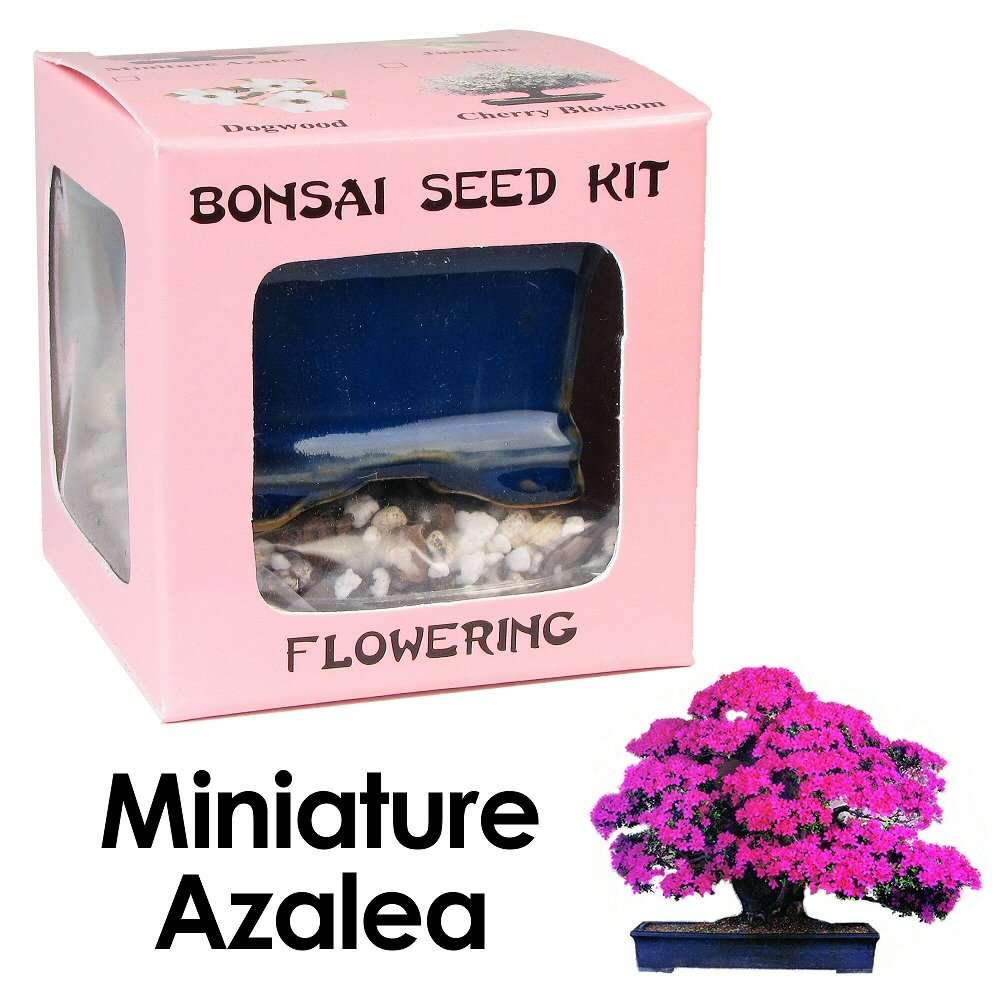 Amazon Com Eve S Miniature Azalea Bonsai Seed Kit Flowering Complete Kit To Grow Azalea Bonsai From Seed Live Indoor Bonsai Plants Grocery Gourmet Food