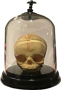 Asylum Zone Baby Fetus Skull Prop