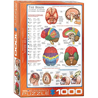 EuroGraphics Human Body (The Brain) 1000 Piece Puzzle: Toys & Games