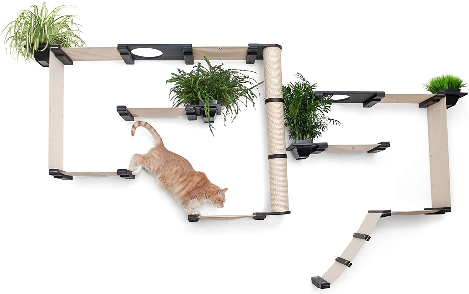 cat shelves with plants