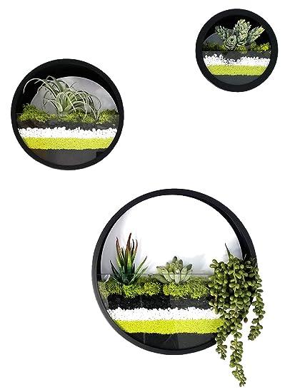 Amazon Com Best M Round Wall Hanging Plant Terrarium Iron Planter