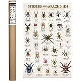 Amazon com: Poecilotheria Tarantula Genus 24x36 Poster: Posters & Prints