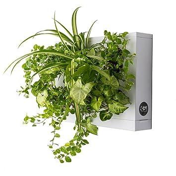 Ortisgreen Hoh De Tableau Végétal Mural Pot Pour Plantes Mural A
