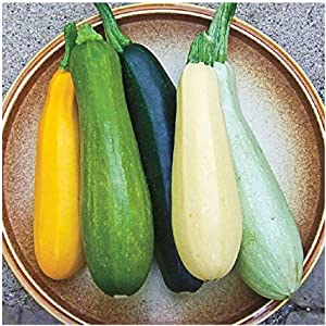 David's Garden Seeds Zucchini Summer Melody 9112 (Multi) 50 Non-GMO, Heirloom Seeds