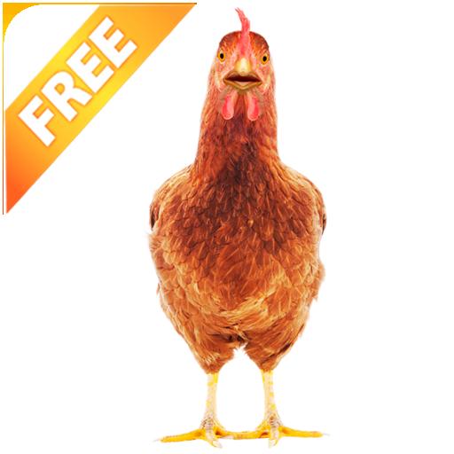 - Real Talking Chicken