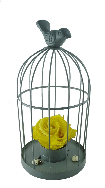 Jaula de pájaros gris con rosa amarilla eterna.: Amazon.es: Handmade